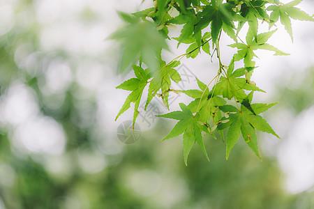 绿色叶片背景光斑阳光环境图片