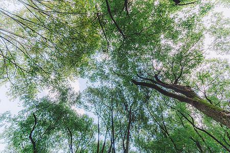 结构树木植物阳光森林叶片图片
