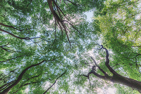 树木植物阳光图案纹理结构图片