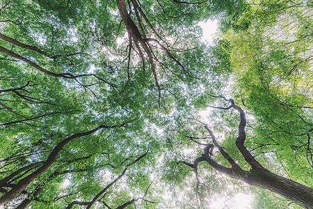 绿色植物树木结构仰拍清新图片