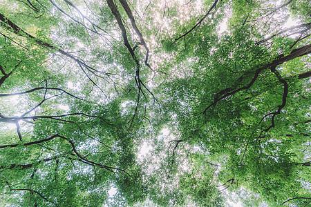 植物绿色树木仰拍天空图片