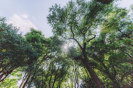 环境绿色背景自然仰拍风景图片