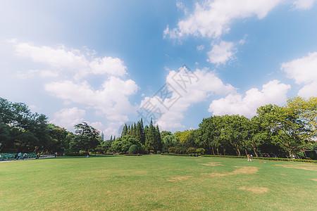 蓝天白云树木草地枝繁叶茂图片