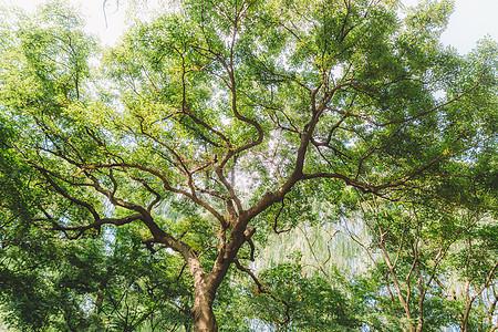 清新自然枝繁叶茂植物树木图片