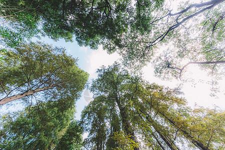 枝繁叶茂蓝天白云树木植物图片
