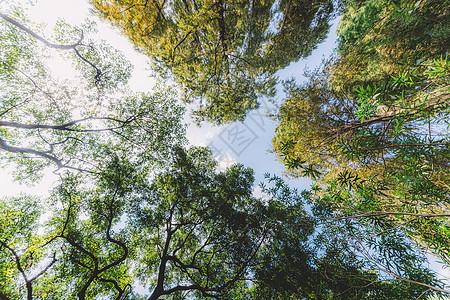蓝天白云植物树木叶子叶片图片