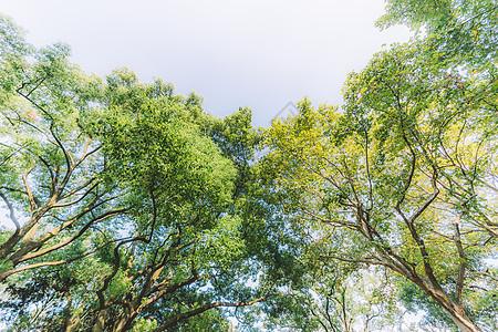 枝繁叶茂天空绿色树木植物图片
