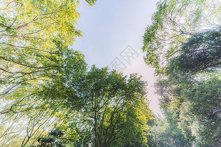 蓝天白云仰拍结构枝繁叶茂图片