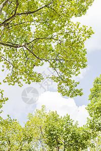 秋天树叶秋意蓝天白云风景图片