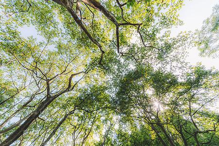 绿色树木枝干仰拍枝繁叶茂图片