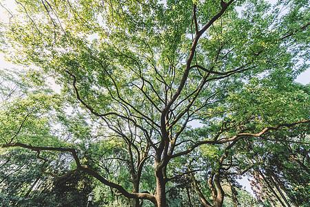 枝繁叶茂树木图案结构绿意自然图片