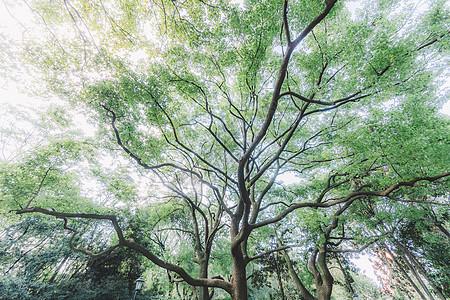 枝繁叶茂树木森林结构叶子图片