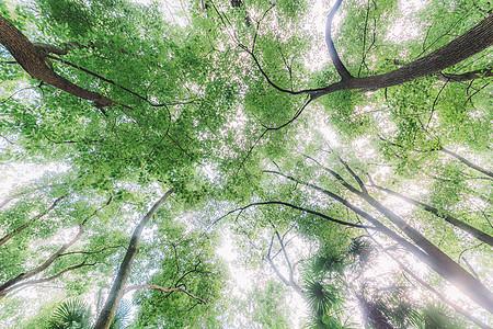 仰拍天空枝干树木枝繁叶茂图片