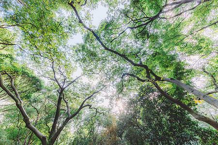 蓝天白云树木植物枝繁叶茂图片
