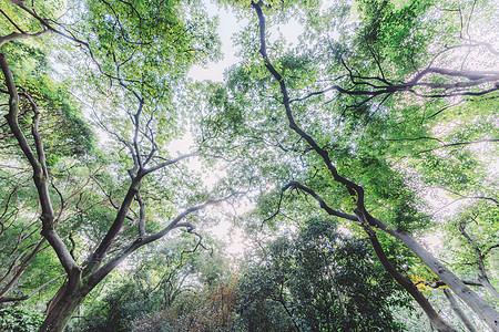 自然风景清新绿色枝繁叶茂图片