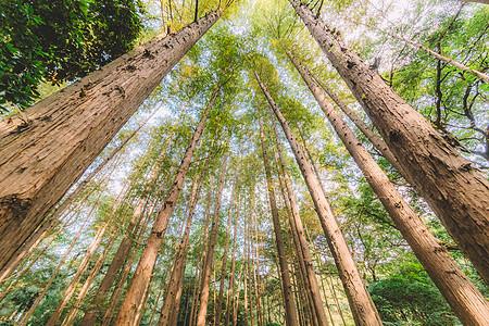 树木植物绿色天空结构图片