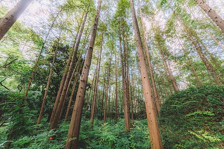 绿色植物树干森林结构自然图片