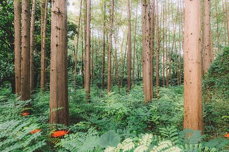 绿色森林树木植物叶子叶片图片