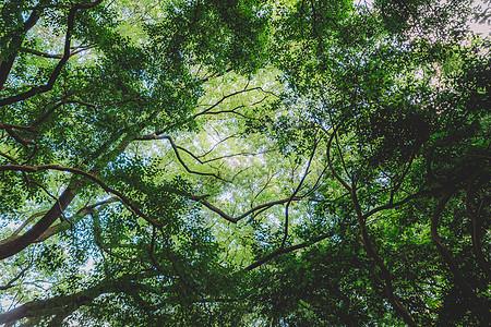 绿色植物结构树枝枝繁叶茂图片