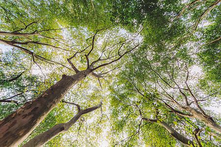 绿意盎然树枝植物树木仰拍图片