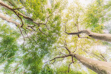 树木枝干仰拍天空枝繁叶茂图片