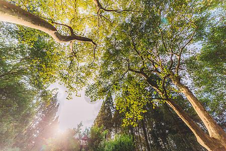 植物树木阳光森林绿意图片