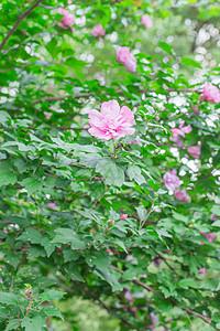 红花开放绿叶绿植清新背景图片