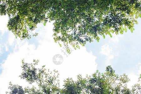 树林树叶蓝天白云自然风光图片