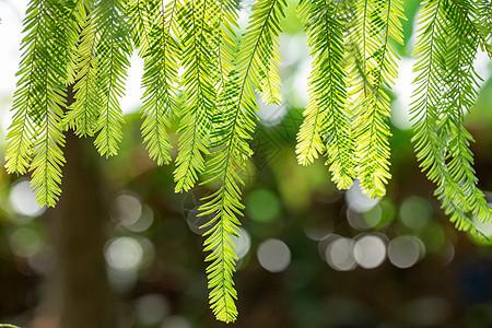 自然绿色树枝树叶图片