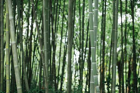 风景绿色植物竹林图片