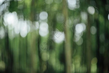 风景绿色植物竹林虚化背景图片