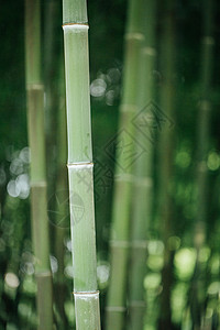 风景绿色植物竹林背景图片