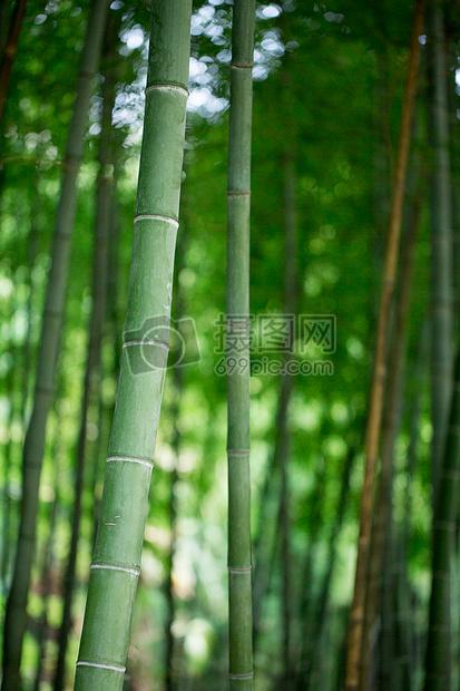 风景绿色植物竹林背景