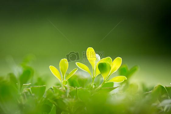 大自然绿色树叶图片