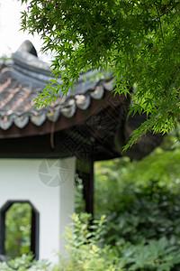 园林里的绿色枫叶和凉亭图片
