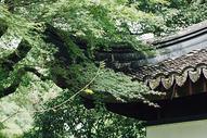 亭子上的枫叶图片