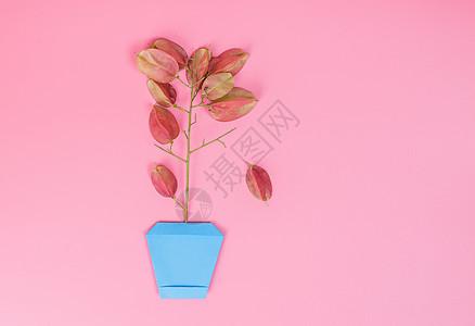 清新折纸花盆红果创意摆拍图片