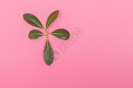 清新文艺树叶排列创意摆拍图片
