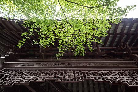 古典传统建筑和绿色树枝图片