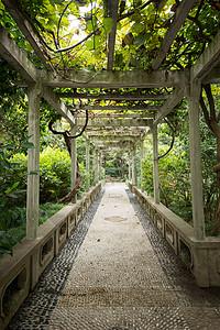 公园绿色树荫下的长廊图片