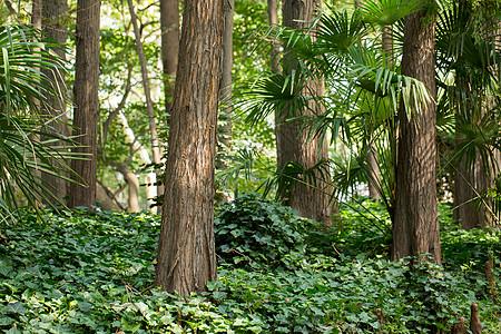 自然风景绿色植物树叶图片