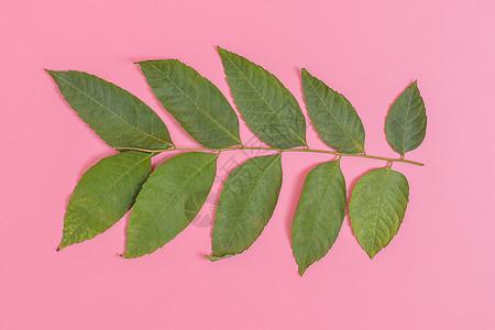 清新文艺枝叶正面摆拍图片