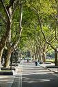 公园里绿树成荫的道路图片