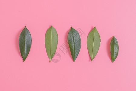 清新文艺叶子正反面摆拍图片