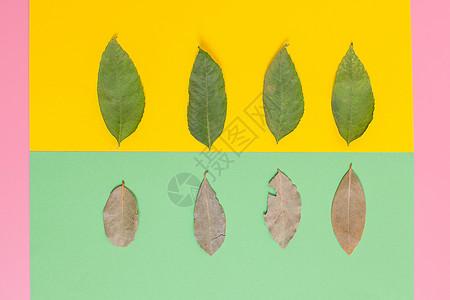 清新文艺叶子枯叶创意摆拍图片