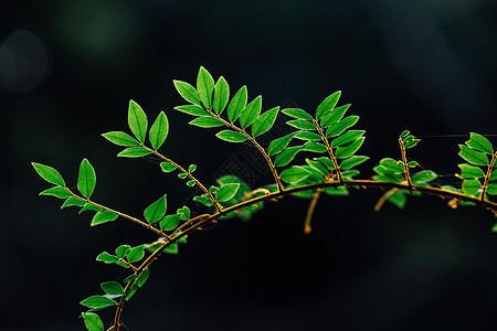 自然植物绿色树叶素材背景图片