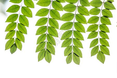 自然绿色树叶背景素材图片