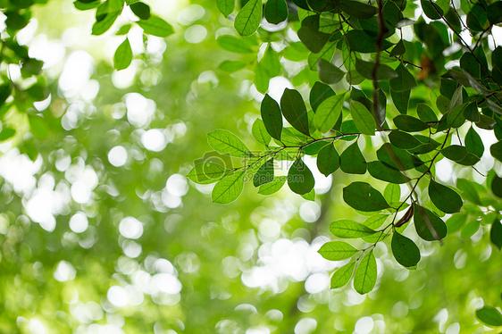 自然绿色树叶素材图片