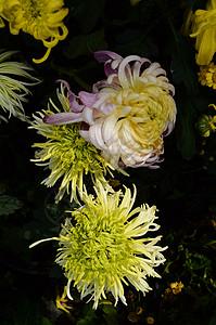 秋雨 带哀怨 寒风 催枯叶 但见 凋谢的 花叶 更惜 人生的 苦短图片