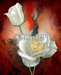 白玫瑰特写图片